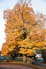Fall_Roockliffe_IlsPrk-715tndci