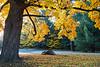 Fall_Roockliffe_IlsPrk-695tnd