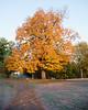 Fall_Roockliffe_IlsPrk-721tnda
