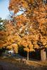 Fall_Roockliffe_IlsPrk-724tnd