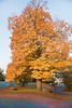 Fall_Roockliffe_IlsPrk-710tnda