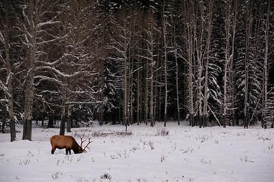 Canadian Rockies Winter 2007