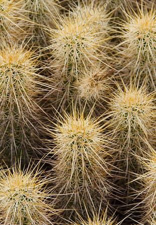 Cactus 9123