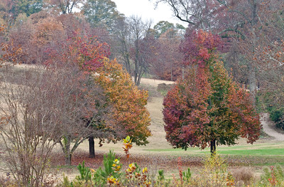 Candler Park in Autumn