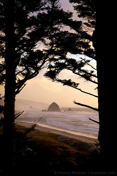 Golden glow illuminates the evening sky through the trees in Cannon Beach, Oregon.