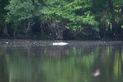 Canoe Trip 5/15/2010
