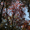Changing Fall Leaves - Westchester Wilderness Walk, Pound Ridge, NY