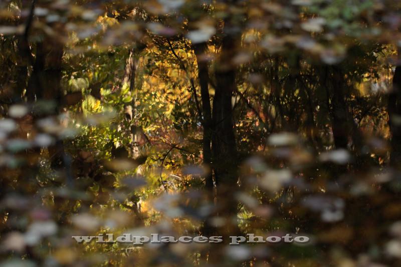 Reflection in Wetland Pool - Westchester Wilderness Walk, Pound Ridge, NY