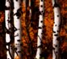 artsy trees