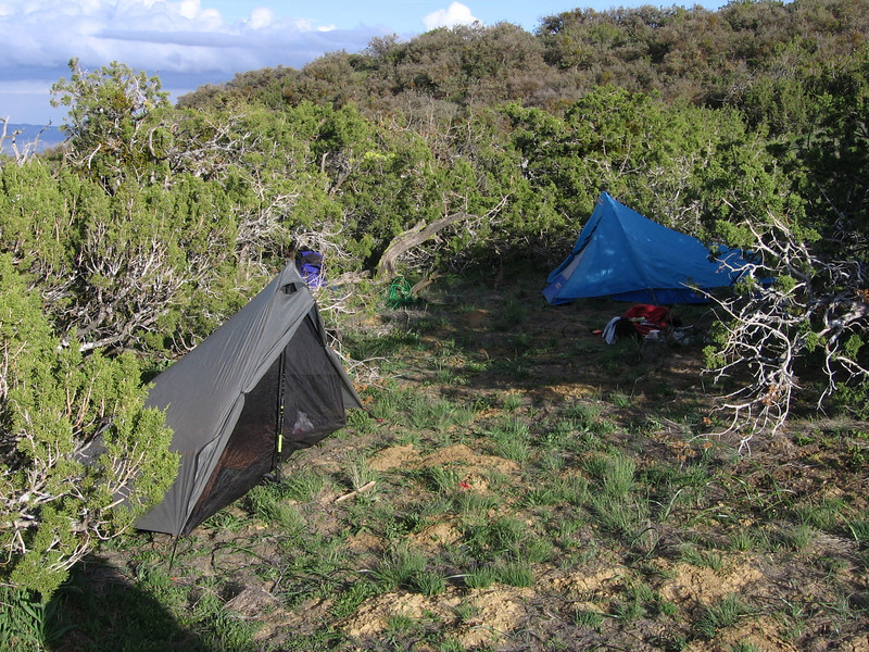 Ridgetops can be windy, so we nestled our tents amongst some sheltering junipers.