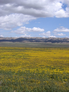 Flowers, clouds, and the trace of the San Andreas fault off to the east.