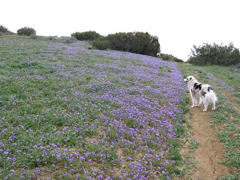 Sheila amidst the flowery slopes; where'd that bird go?