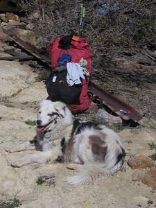 Lounging Sheila, guarding my pack (or was she waiting for me to drop a tidbit of trail-mix?)