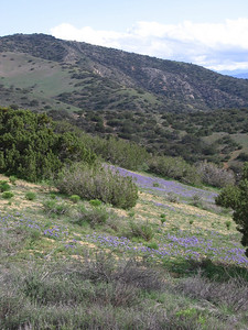 Wildflowers and vistas, looking southeast along the ridge.