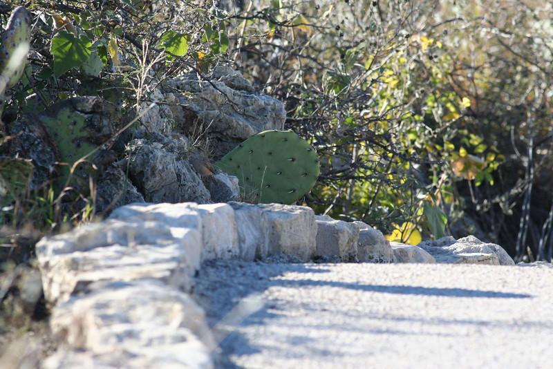 Interpretive Trail - Rock Wren