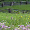 Carriage Hill Farm 7-18-2013