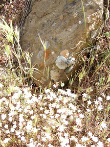 Flowers, grasses, and lichens on a boulder.