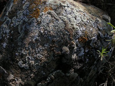 Closeup of the lichen-encrusted boulder.