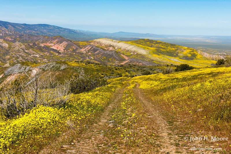 The road less traveled.  Caliente Range in Carrizo Plain National Monument.