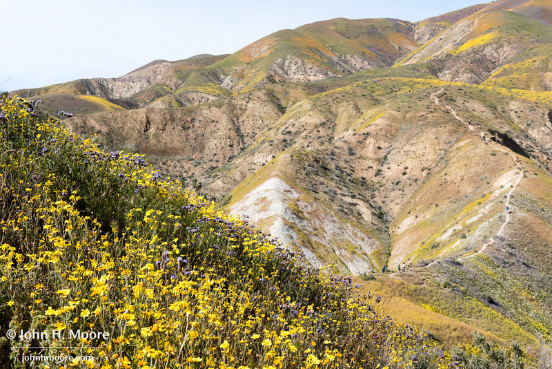 A hiking trail leads up into the Temblor Mountains and patches of colored wildflowers in Carrizo Plain National Monument
