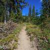 The Pacific Crest Trail near Mt. Adams