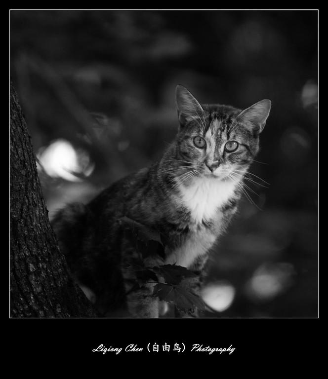 不管黑猫白猫,镜头前都是好猫