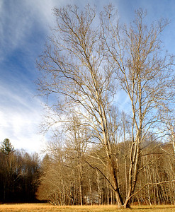 Cataloochee Valley Late Afternoon