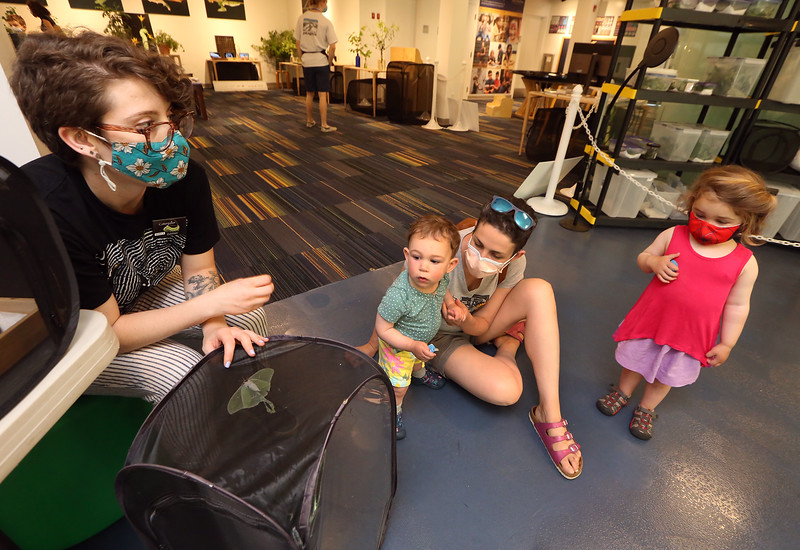 Sam Jaffe, founder and executive director of The Caterpillar Lab, and staff members bring live exhibits back to the Discovery Museum in Acton. Educator Sara Burrell of The Caterpillar Lab shows a cage of luna moths to Rebekah Swartz of Lexinton and her daughters Hannah, 1, and Rae, 3.  SUN/Julia Malakie