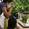 Sam Jaffe, founder and executive director of The Caterpillar Lab, and staff members bring live exhibits back to the Discovery Museum in Acton. Eunjoo Kang of Hudson, Mass., and her son Junu Jeong, 4, and Yoojin Jeong, 2, watch caterpillars on plants. SUN/Julia Malakie