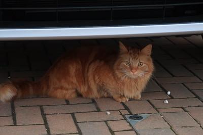 Sol hiding under his car