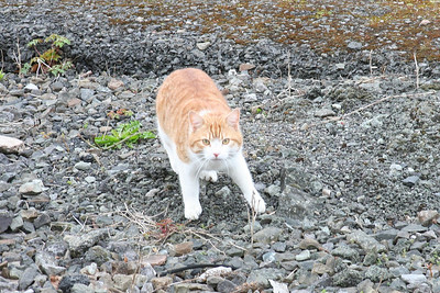 Welsh cat on the ballast.