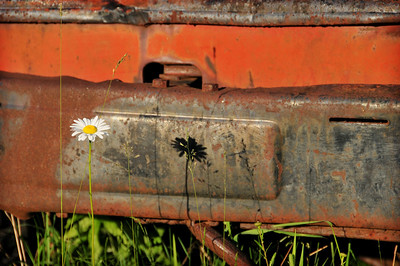 Flower and rusty metal patina.