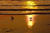 Sanderling Sunrise<br /> Sanderling Sunrise, Outer Banks, North Carolina