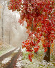 October Snow<br /> October Snow, Blue Knob, Bedford County, PA