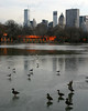 "6090-Ducks and seagulls enjoy the ice in Central Park in New York City <a href=""http://www.cwcphotography.com/gallery/1199387"">(8x10)</a>"
