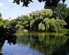 "<font color=""blue""><b>NEW!</b></font> 6054-A rowboat in the middle of a quiet lake in Central Park <a href=""http://www.cwcphotography.com/gallery/1199387"">(8x10)</a>"