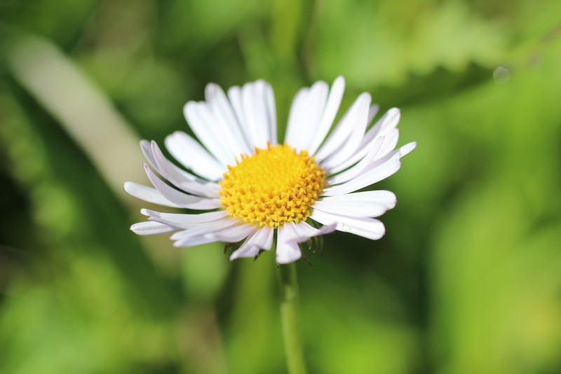Happy daisy!
