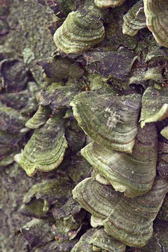 Lichen on tree trunks