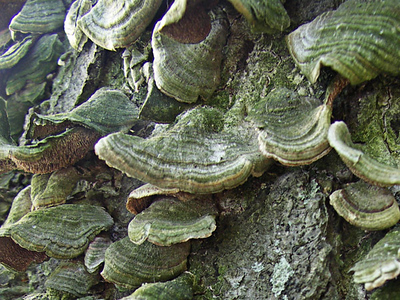 Lichen on tree trunks