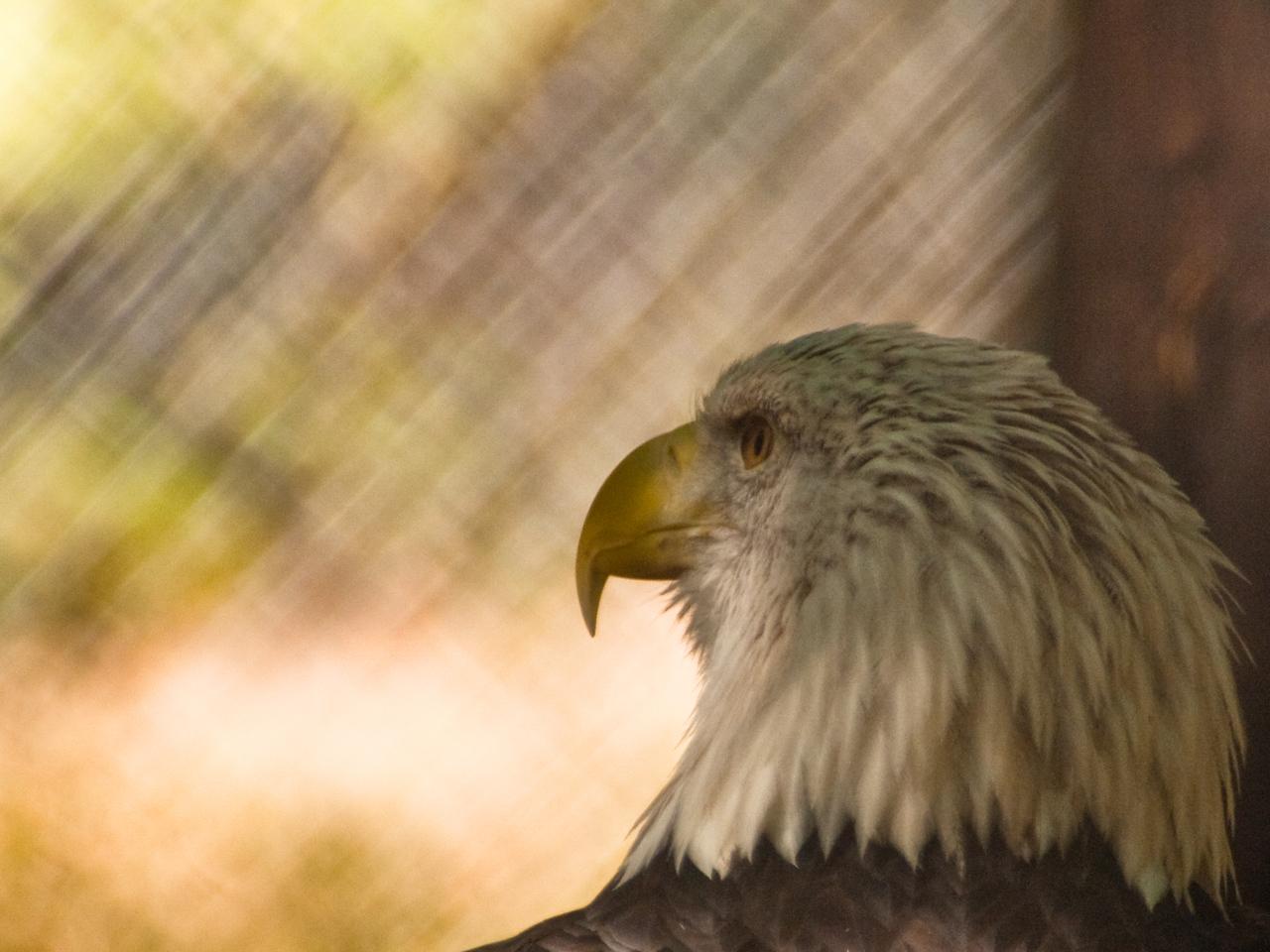 Raptors, Charlotte, Carolina Raptor Center, Hawks, Owls, Birds of Prey