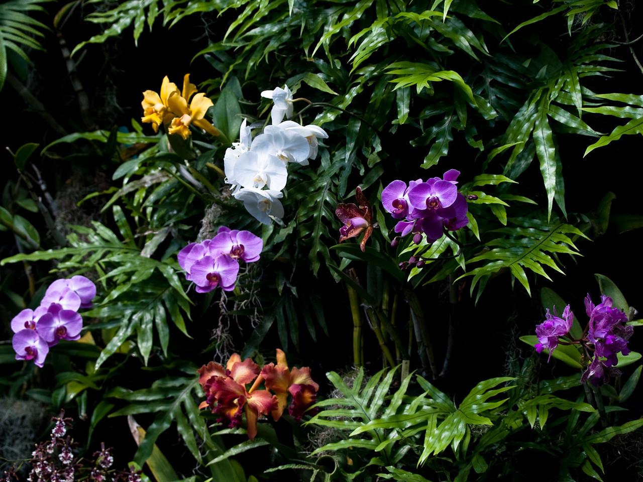 Daniel Stowe Botanical Garden, Belmot Abbey, Charlotte, Orchids, Flowers