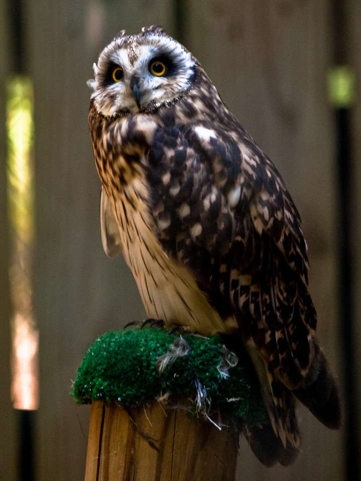 Raptors, Charlotte, Carolina Raptor Center, Hawks, Owls, Birds of Prey