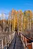 golden fall bridge