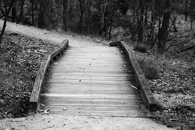 Alternate Processing: Red Hi Contrast Filter -  Chermside Hills Reserve reconnoitre, Brisbane, Queensland, Australia; Wednesday 12 October 2016. Photos by Des Thureson - http://disci.smugmug.com