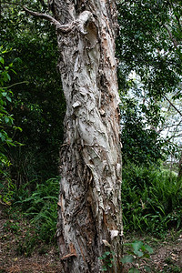 Chermside Hills Reserve reconnoitre, Brisbane, Queensland, Australia; Wednesday 12 October 2016. Photos by Des Thureson - http://disci.smugmug.com