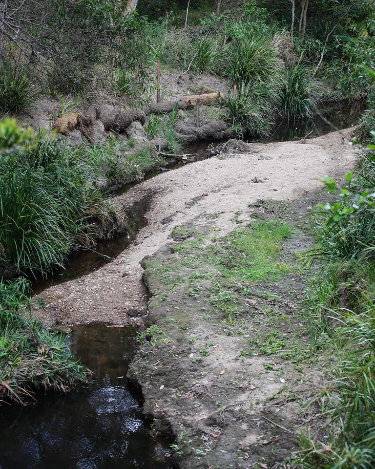 "Little Cabbage Tree Creek - Chermside Hills Reserve reconnoitre, Brisbane, Queensland, Australia; Wednesday 12 October 2016. Photos by Des Thureson - <a href=""http://disci.smugmug.com"">http://disci.smugmug.com</a>"