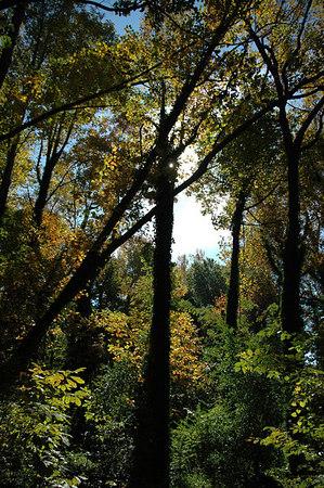 Chesapeake Arboretum 11-5-2006