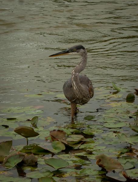 Chicago Botanical Garden - September 9, 2011