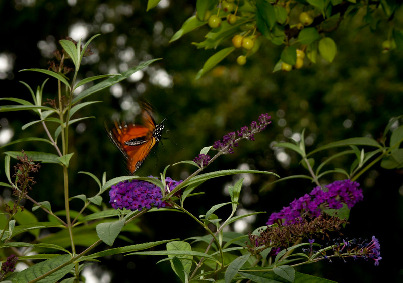 Chicago Botanical Garden - September 9, 2011