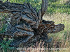 Dead tree trunk; best viewed in the largest size